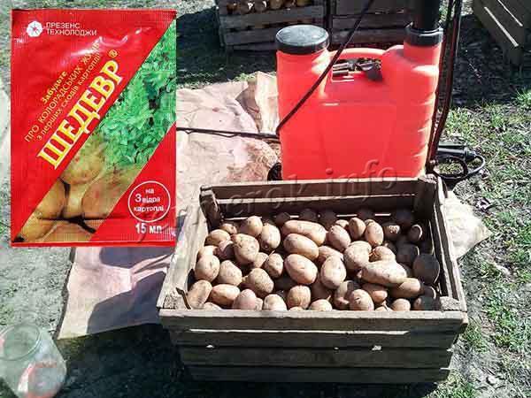 Протравливание картофеля перед посадкой