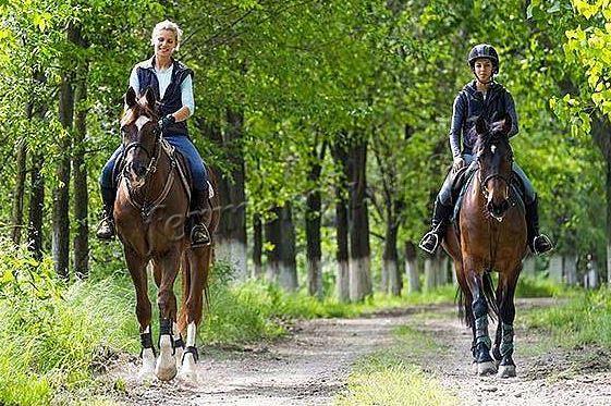 Прогулки спортивных лошадей