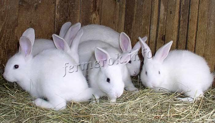 Фото крольчат