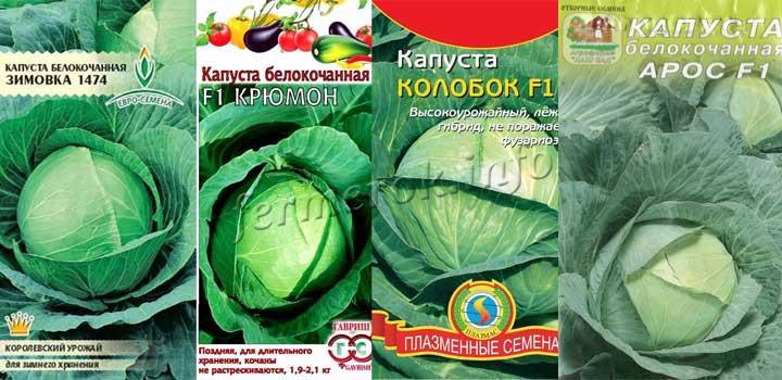 Фото сортов капусты для хранения: Зимовка, Крюмон, Колобок, Арос