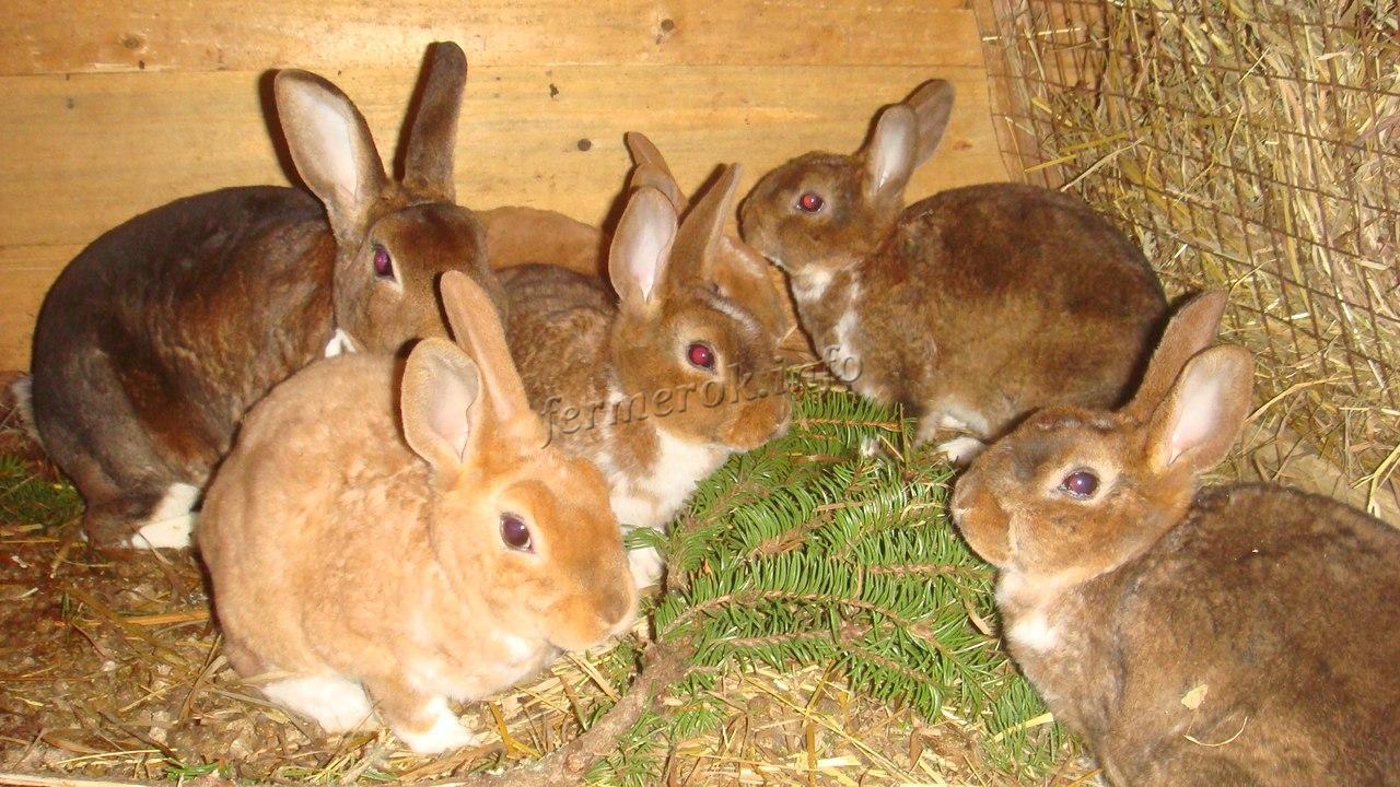 Что нельзя давать кроликам кушать