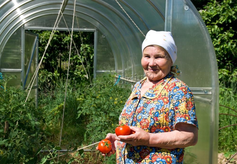 Бабушка держит помидоры в руках возле теплицы