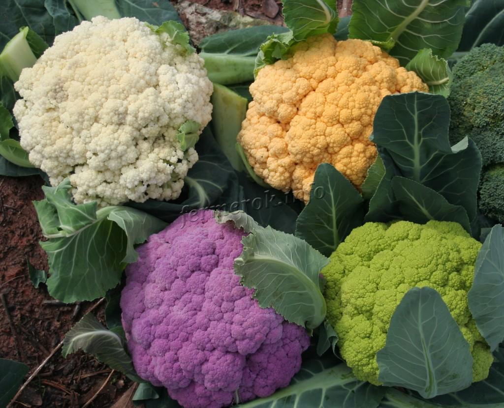 Цветная капуста разных цветов