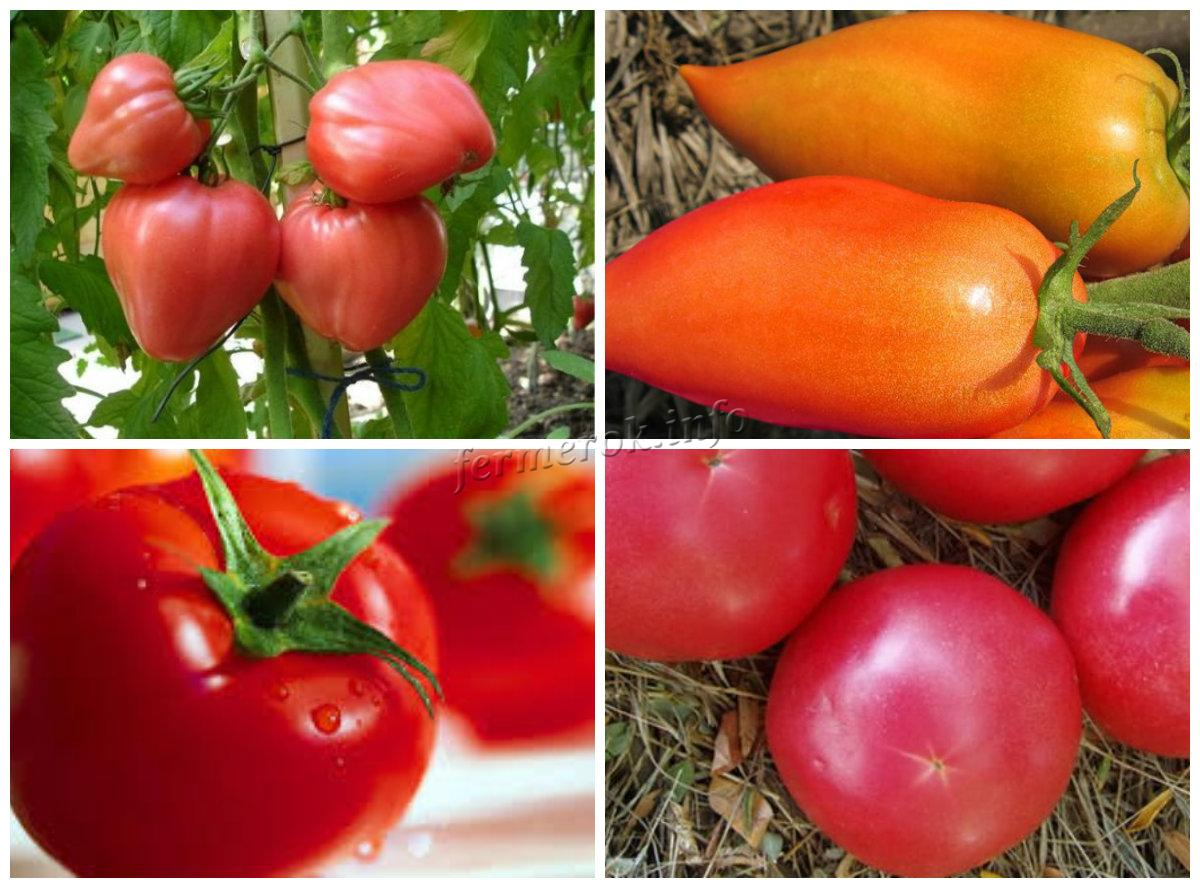 Сорта томатов для разных условий выращивания
