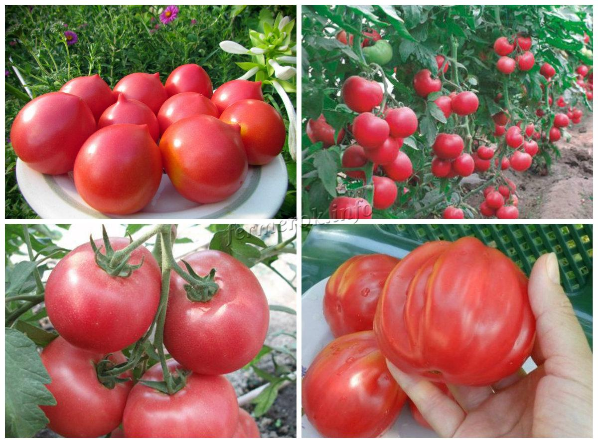 Сорта розовых томатов