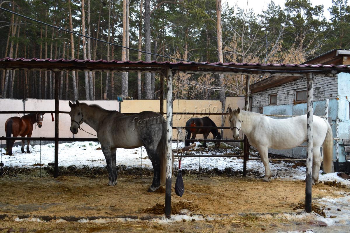 Особенности зимнего кормления лошади
