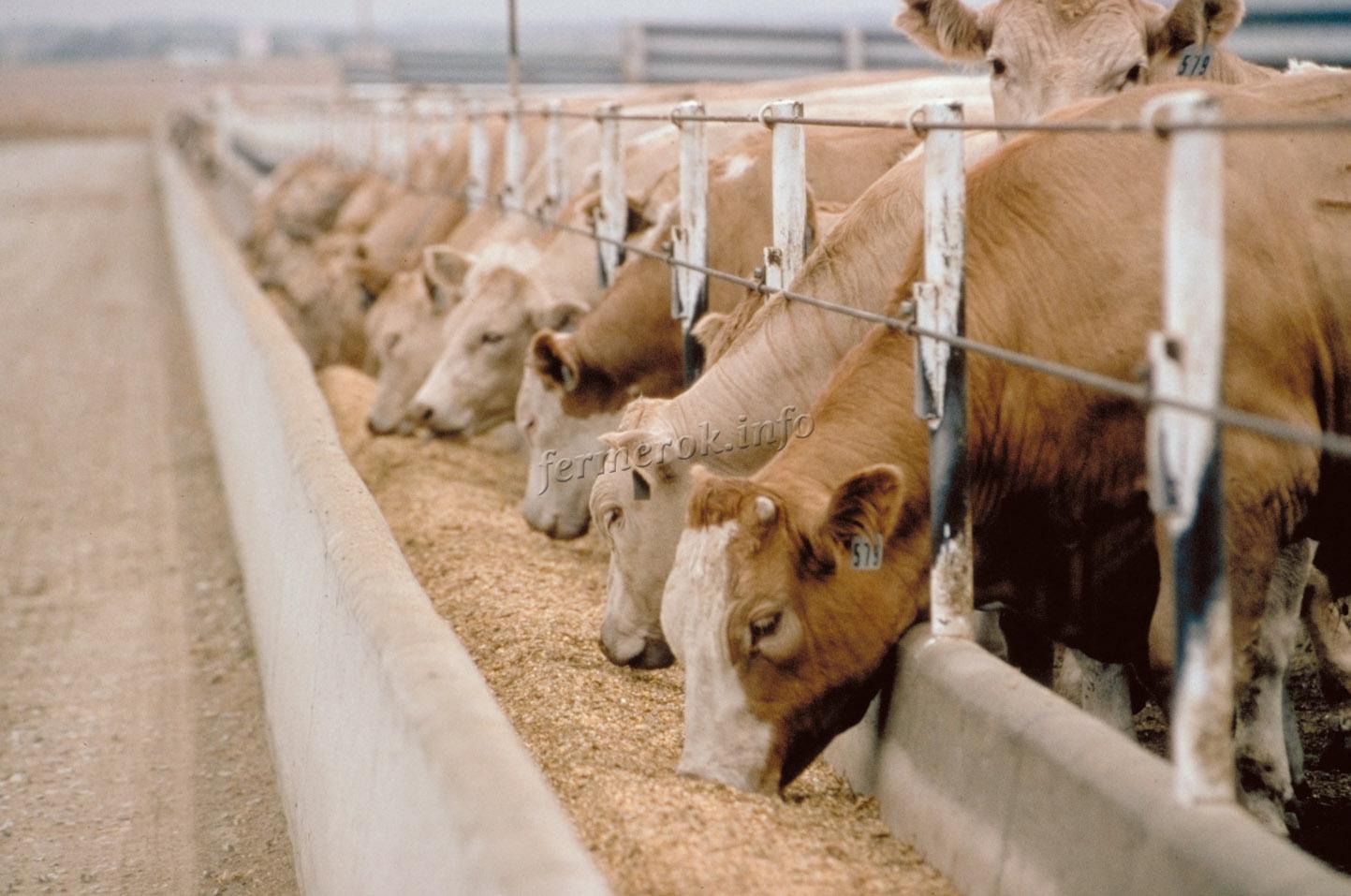 Премиксы для животных