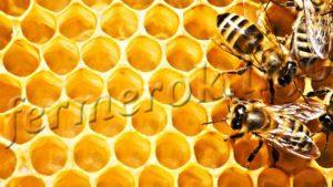 Фото пчел на сотах