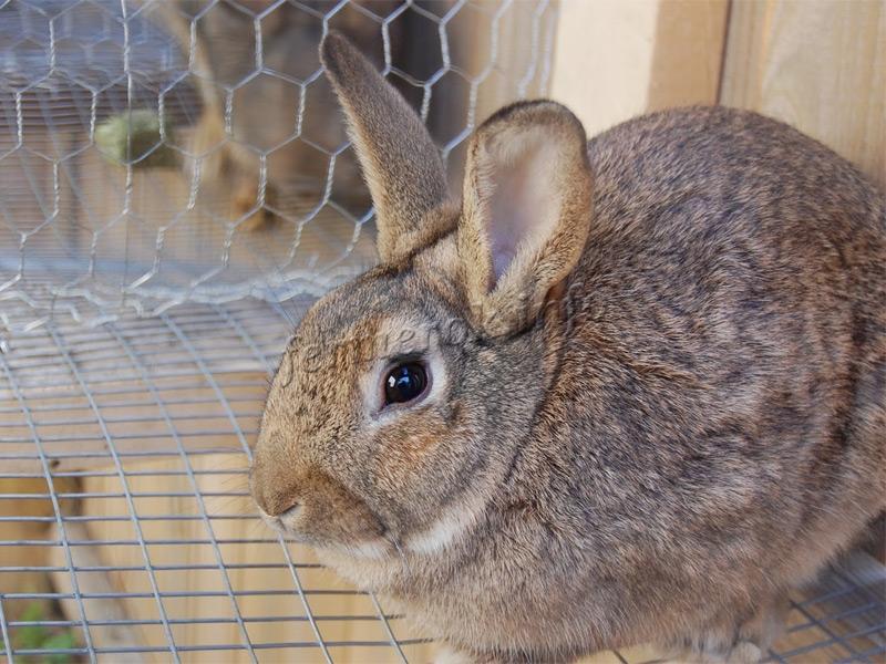 Кормушки для кроликов, преимущества и недостатки