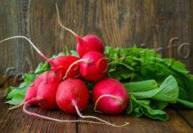 Преимущества и нюансы выращивания редиса в теплицах