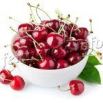 Сорта вишни для Подмосковья