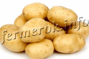 Описание лучших ранних сортов картофеля