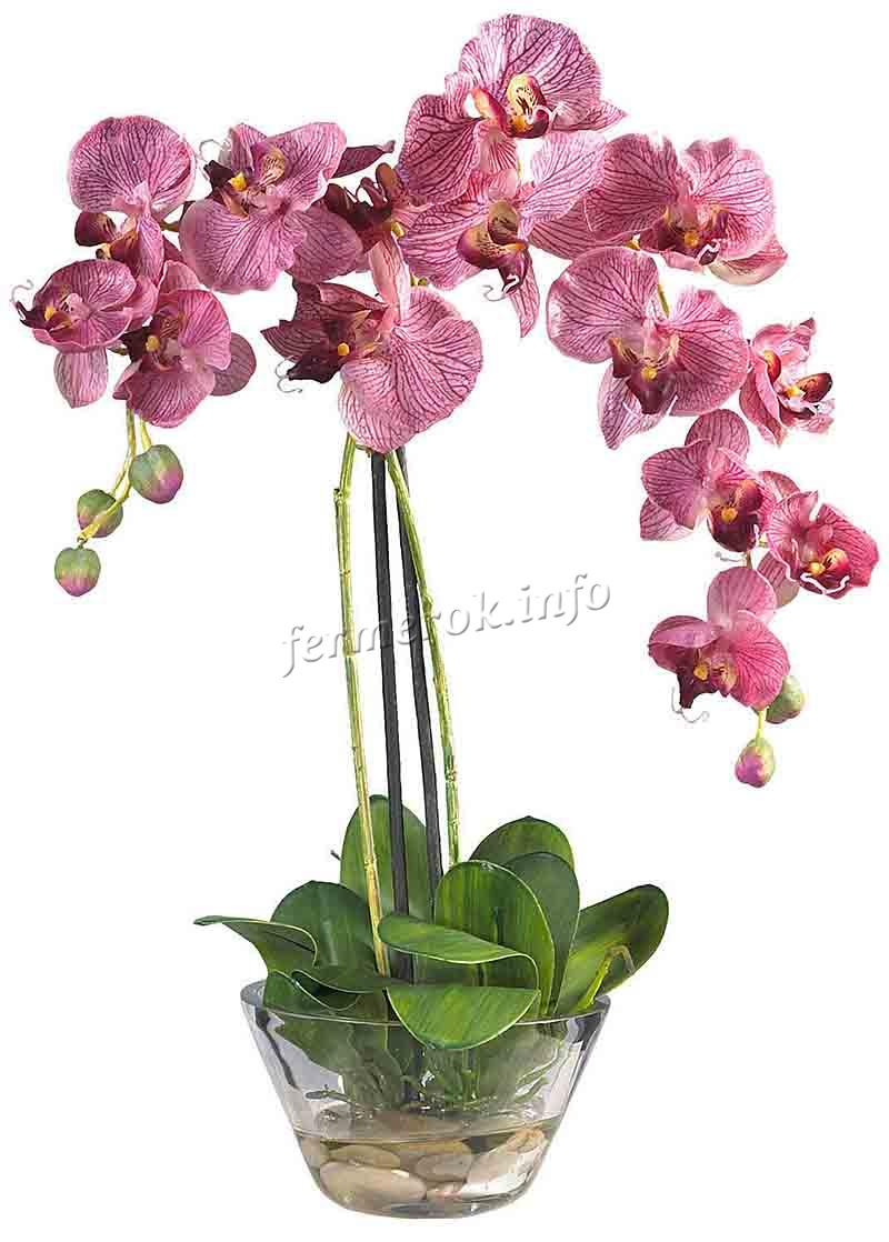 Характеристики орхидеи