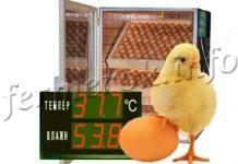 Температура и влажность в инкубаторе