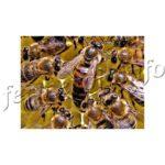 Канди для пчел, рецепты, виды