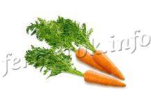 Посадка моркови под зиму, сроки посадки и уход