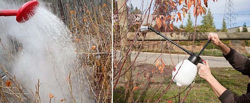 Осенняя обработка медным купоросом