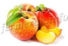 Сорт персика Золотая Москва