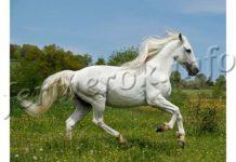 Андалузская лошадь, описание породы