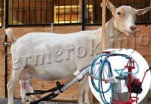 Доильный аппарат для коз: Доюшка, Белка, Буренка