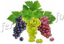 Фунгициды для винограда, описание