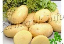 Картофель Импала, описание сорта