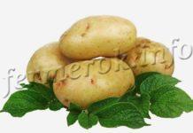 Картофель Скарб, описание сорта