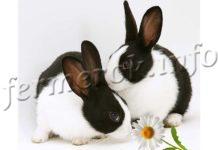 Ушной клещ у кроликов