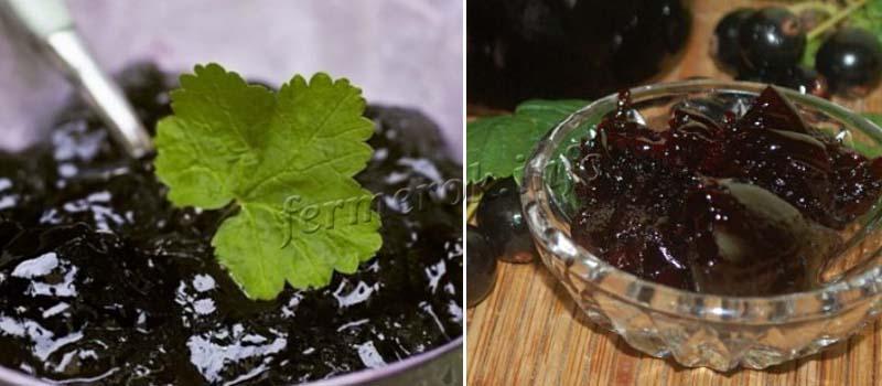 Отзывы садоводов о смородине Багира