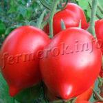 Когда сажать помидоры на рассаду в 2019 году