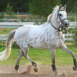 Фото терской лошади