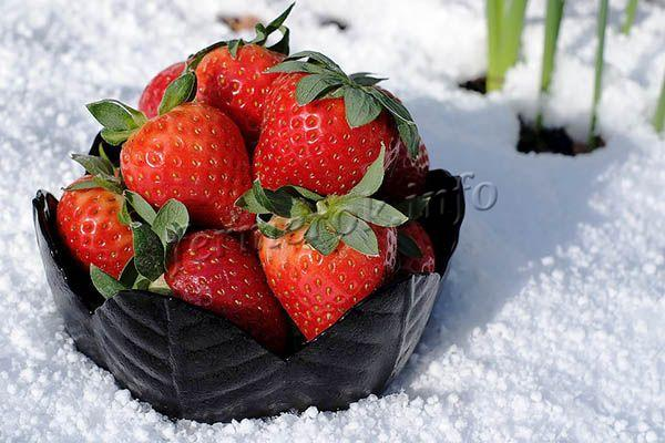 Морозостойкость до -25 градусов по Цельсию