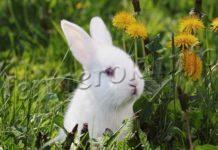 Что можно давать кроликам кушать