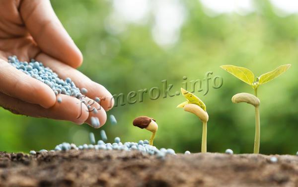 Что такое минеральные удобрения?