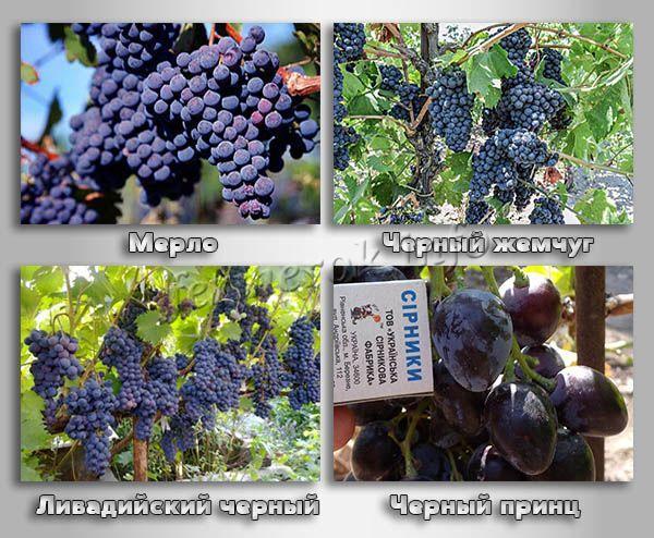 Винные сорта черного винограда