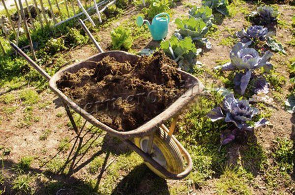 Заготовка навоза для огорода
