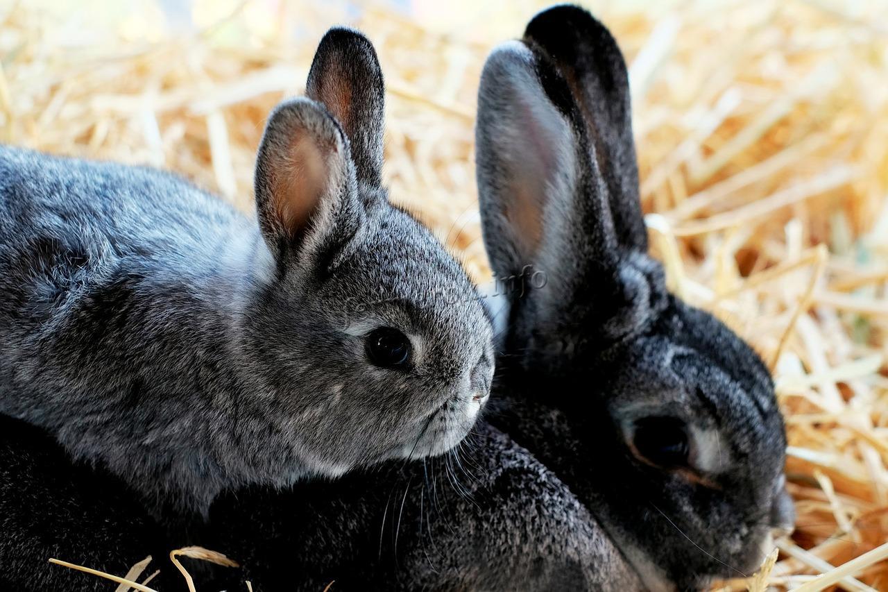 Сколько лет живут домашние кролики?