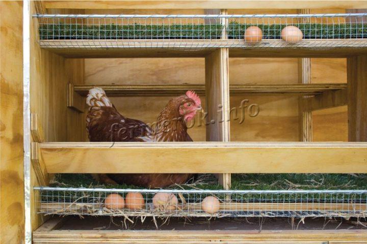 Гнездо для кур несушек с яйцесборником