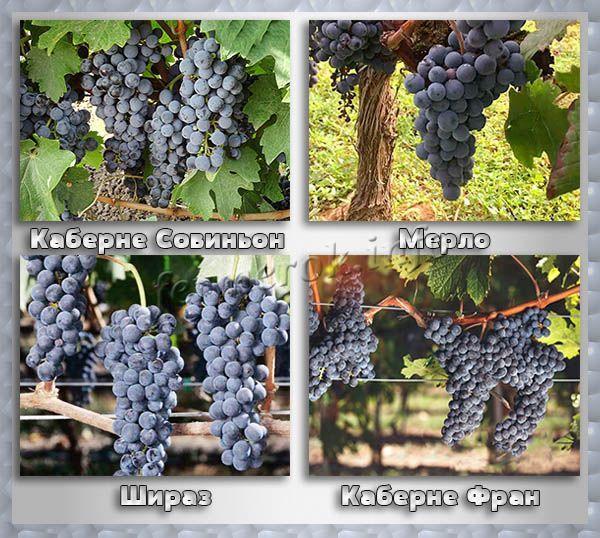 Черный винный виноград