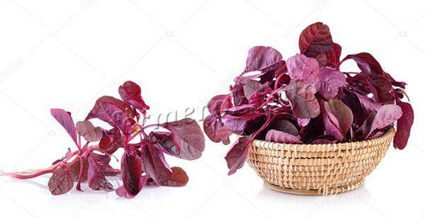 Фото красного шпината