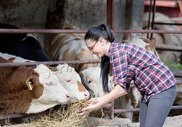 Каждому фермеру рекомендуется вести журнал откорма бычков