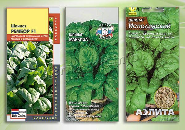 Лучшие сорта зеленого шпината