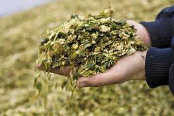 Окрас качественного силоса должен быть от оливкового до зеленого