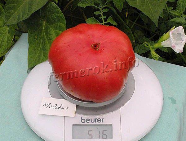 Плоды томатов Медовый растут массой 300-400 г. Вкус сладковатый с медовым послевкусием