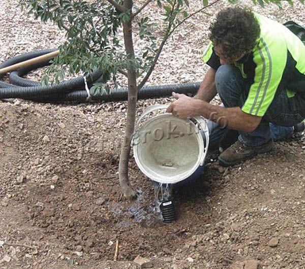 При поливе на 1 дерево расходуется в среднем 10 л воды