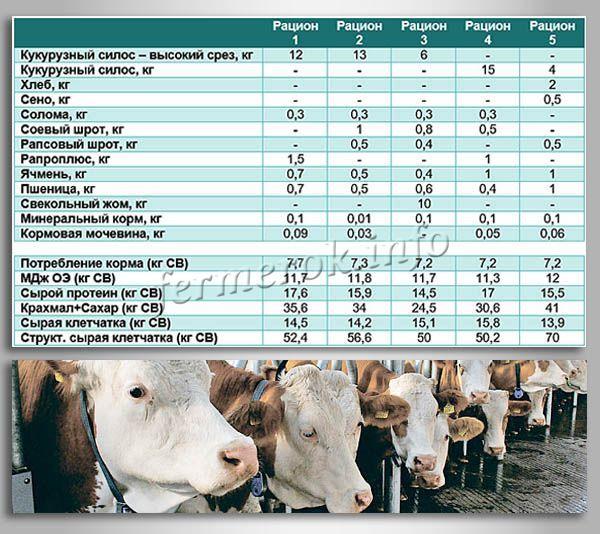 Примеры рационов для откорма бычков