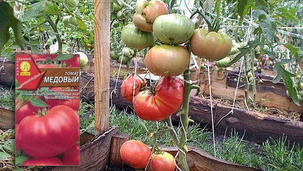 Урожайность томата Медовый в среднем до 15 кг с квадрата