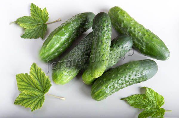 Для приготовления стоит брать засолочные сорта зеленцов