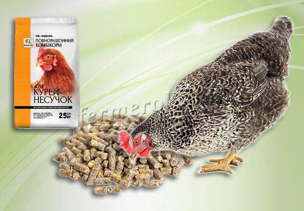 Гранулированный корм стимулирует работу ЖКТ и рекомендуется для кур, которые отличаются активностью