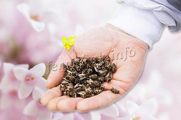 Пчелиный подмор – это, по сути, мертвые пчелы, умершие естественным образом